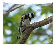 Yellow Rumped Warbler Looking Down Tapestry
