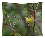 Yellowthroated Warbler Tapestry
