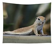 Yoga Ground Squirrel Style Tapestry