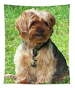 Yorkshire Terrier In Park Tapestry