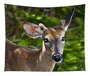 Young Buck 2 Tapestry