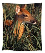 Young Deer Laying In Grass Tapestry