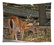 Young Whitetail Tapestry