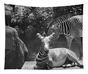 Zebras In Black And White Tapestry