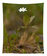 Arctic Starflower Tapestry