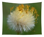 Coltsfoot B2 Tapestry