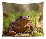 The Common Toad 3 Tapestry