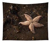Vanishing Star Tapestry