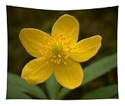 Yellow Wood Anemone Tapestry