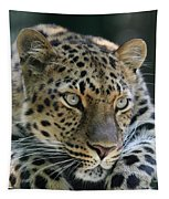 Amur Leopard #2 Tapestry