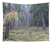 Autumn Coniferous Forest In The Morning Mist Tapestry