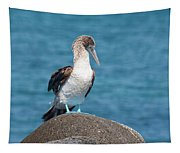 Blue-footed Booby On Rock Tapestry