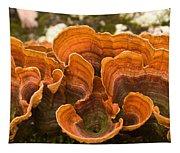 Bracket Fungi Tapestry