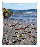 Cape Cod Beach Finds Tapestry