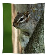 Chipmunk Tapestry