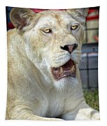 Circus Lion Tapestry