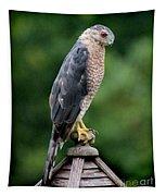 Cooper's Hawk  Tapestry