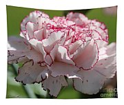 Creamy White With Red Picotee Carnation Tapestry