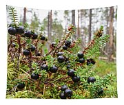 Crowberry Tapestry
