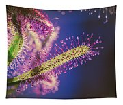 Dew Covered Tentacles Tapestry
