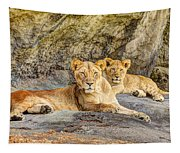 Female Lion And Cub Hdr Tapestry