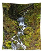 Streaming Through Rainforest Rubble Tapestry