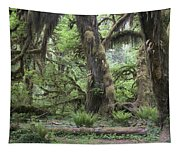 Hoh Rain Forest 3381 Tapestry