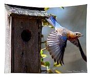 Img_1414-003 - Eastern Bluebird Tapestry