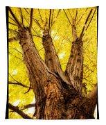 Maple Tree Portrait 2 Tapestry