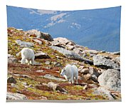 Mountain Goats On Mount Bierstadt In The Arapahoe National Forest Tapestry
