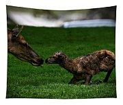 Newborn Elk Tapestry