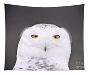 Snowy Owl 3256 A.k.a. Smiling Owl Tapestry
