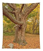 Odiorne Point State Park - Rye New Hampshire Tapestry