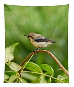 Purple Sunbird Tapestry