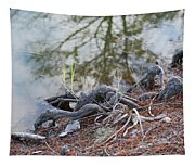 Rooted Lake Edge Tapestry