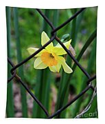1 Sad Daffy Behind Bars Tapestry