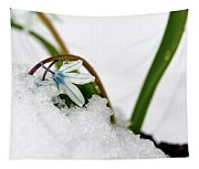 Scilla On Snow Tapestry