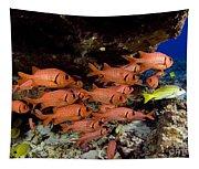 Shoulderbar Soldierfish Tapestry