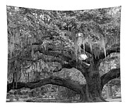 Sprawling Live Oak Tapestry