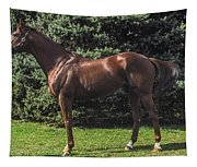 Thoroughbred Stallion Tapestry