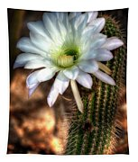 Torch Cactus - Echinopsis Candicans Tapestry