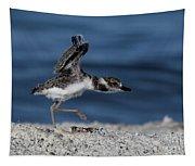 Wilson's Plover Tapestry