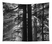 x Tapestry