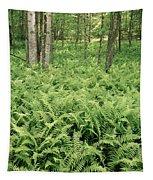 146112 Ferns In Pisgah Nat Forest V Tapestry