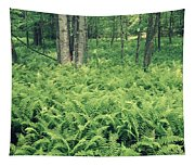 146113 Frens In Pisgah Nat Forest H Tapestry