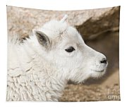 Baby Mountain Goats On Mount Evans Tapestry