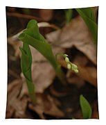 1st Lily Of Spring Tapestry