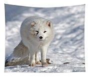 Arctic Fox... Tapestry