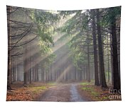 God Beams - Coniferous Forest In Fog Tapestry