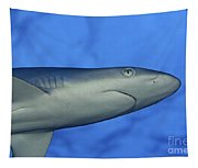 Grey Reef Shark Tapestry